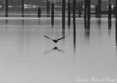 seagull_flying_low