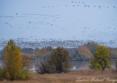 geese_over_sturgeon_lake